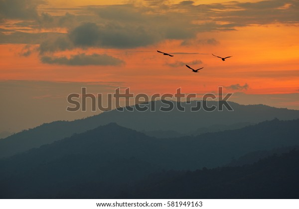 Fiery orange sunset  Dramatic golden sky at the sunset  background with birds flying