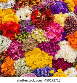 Fiesta de las Flores, silleta, Medellin Colombia