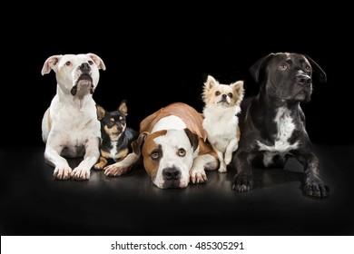 fife dogs
