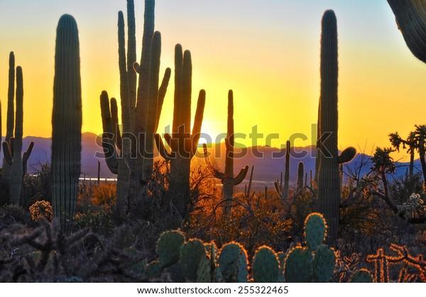 Fifth Sunset at Saguaro National Park near Tucson Arizona.