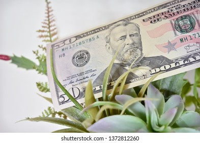Fifty Dollar Bill with Green Succulent Plants