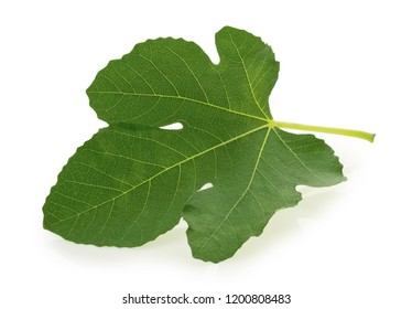 Fig leaf isolated on white background