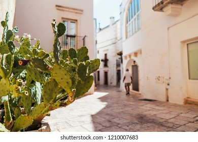 Fig tree in the medieval center of the white village of Locorotondo