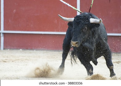 angry bull images stock photos vectors shutterstock