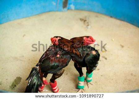 Cock culture pics