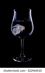 fighting fish in a wine glass