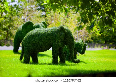 Figure of elephants made of green lawn grass in the park, free space. Green grass covered topiary elephants, landscape design. Grass figure of elephants, topiary figure.
