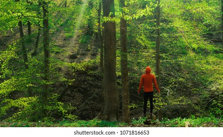 figure in a orange jacket standing in a green forest landscape
