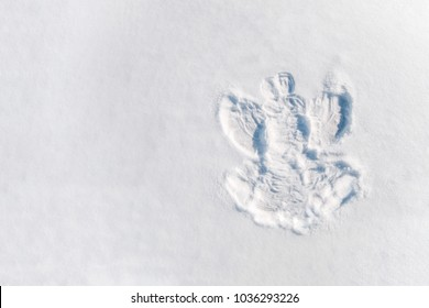 Figure in the snow angel from the girl.