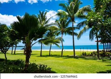 Fijian Iconic Palm Trees in Denarau,  Nadi, Fiji