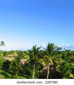 Fijian view. Green palms agains the blue sky.