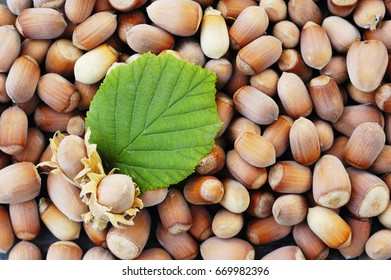 Filbert with leaves  on a nuts background