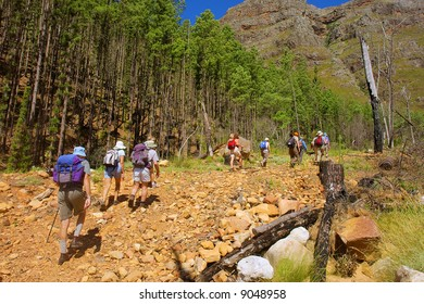 File of hikers enters pine forest in awesome mountains. Shot in Wolwekloof mountain, near Franschhoek, Western Cape, South Africa.