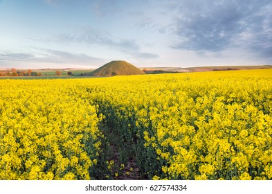 A filed of flowering mustard at Silbury Hill near Avebury in Wiltshire