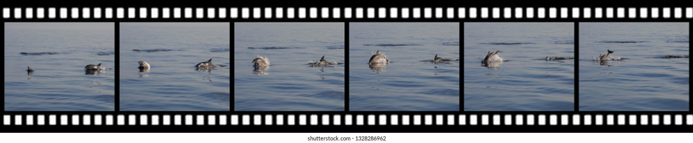 Film stripe sequence from a mommy and baby dolphins jumping