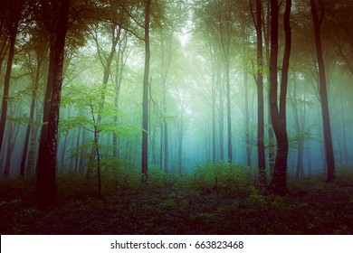 Filtered foggy forest. Clearing into the bush