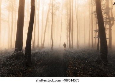 Filtered image of dark silhouette in the foggy forest