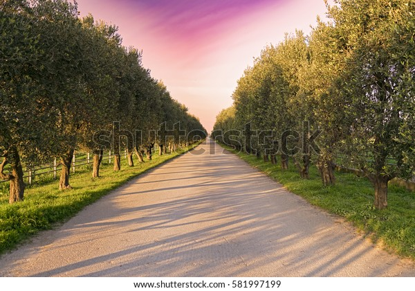 Filtered - Little Road With Trees