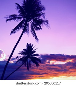 Filtered summertime scene with palm trees and dramatic sky. Vintage look
