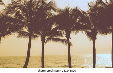 Filtered Vintage Retro Styled Palm Trees on sky