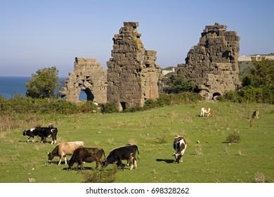 Filyos ancient city ruins and cattles grazing, Zonguldak Turkey
