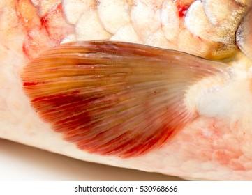 fin fish. macro