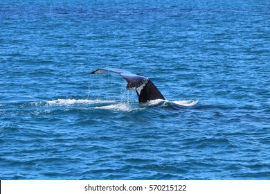 fin of a whale
