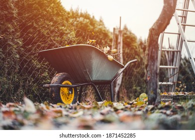 Final garden work of autumn. Green wheelbarrow in the garden. Garden wheelbarrow full of dry branches. Autumn garden theme.