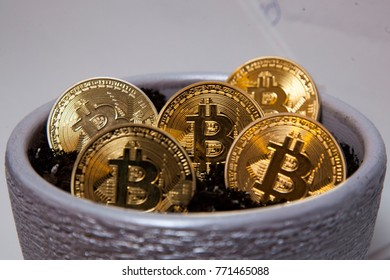 Financial growth concept with golden Bitcoins ladder in plant pot. Photo (new virtual money)