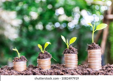 Financial growth, stacking coins, stacking four stacks, and planting trees on it, ascending order, bokeh backdrops.