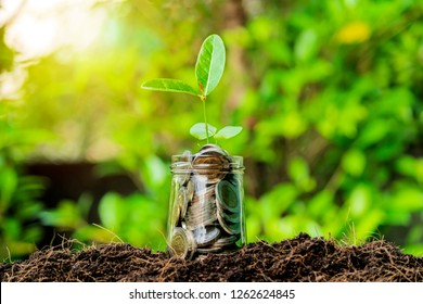 Financial investment concept. The financial growth generated by the investment. The economy is continuing to improve. Dozen glasses with a full coin, The tree is growing.