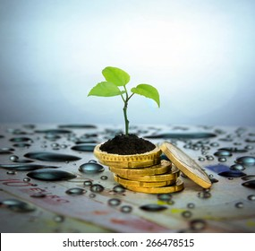Financial planning and investment concept. Coins, tree branch and water droplets in the background.