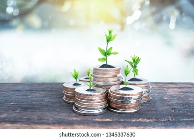 Financial planning, Money growth concept. Coins with young plant on table with backdrop blurred of nature