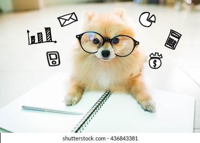 Financial pomeranian dog