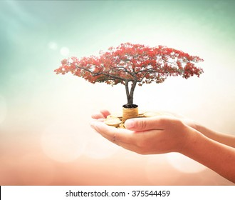 Financial support concept: Human hand holding red big tree and stack of coins over blurred nature background