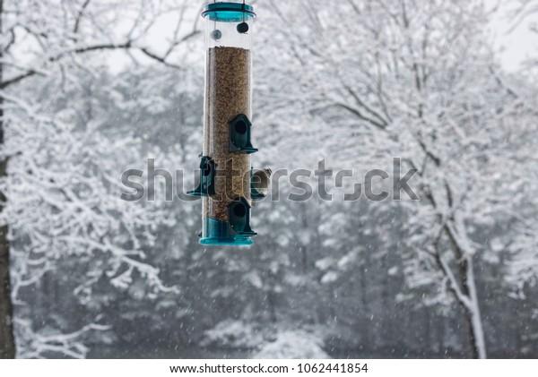 Finch at Bird Feeder