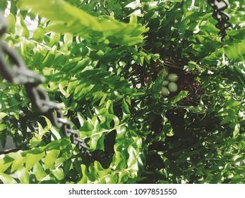 Finch nest with eggs in fern