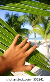 Finding a tropical beach through the foliage