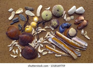Findings from seashore in Norway.