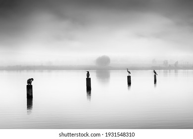 Fine art, black and white, landscape photograph with birds in misty lakes