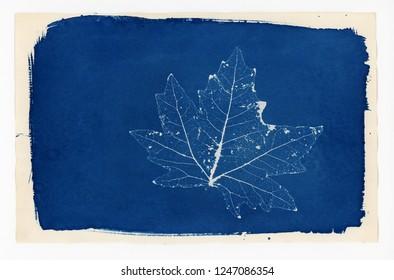 Fine art Cyanotype print of a skeleton leaf on watercolour paper