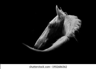 Fine art, low key horse pictures