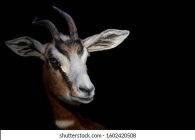 a fine art photo of a gazelle
