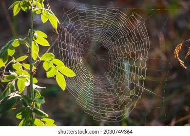 The Fine Art of Spider Webs