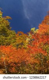 Fine autumn weather