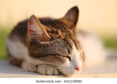 Fine bright macro photo of sleeping cat portrait