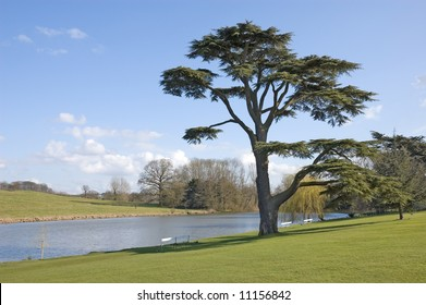 Fine Cedar Of Lebanon tree stands beside a ornamental pool on a sunny spring day