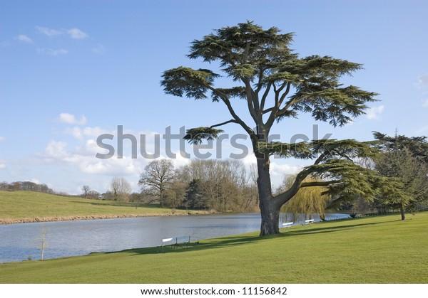 Fine Cedar Lebanon Tree Stands Beside Stock Photo Edit Now 11156842