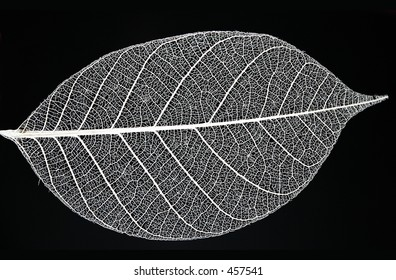 Fine details of a leaf skeleton