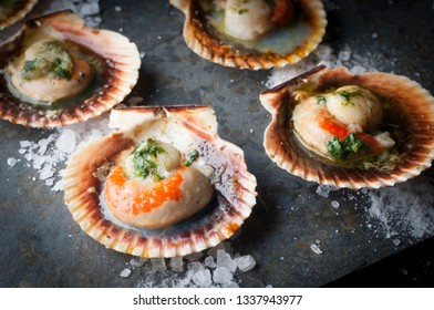 fine oysters in its shell
